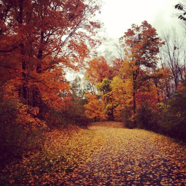 5 Fun Facts You Didn't Know About Fall | Buzzy