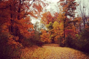 5 Fun Facts You Didn't Know About Fall