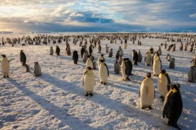 Good News For Penguins And Whales: The Antarctic Ross Sea Has Just Become The World's Largest Marine Reserve!